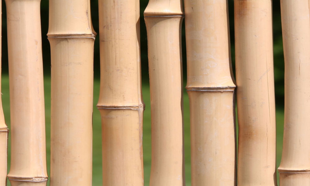 Bamboo Fencing 1