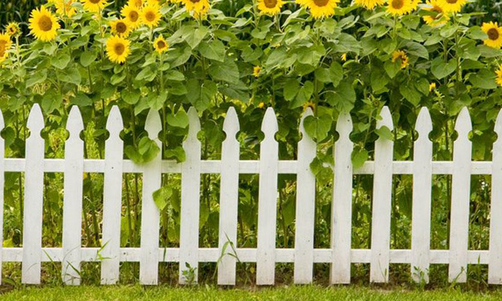 Garden Fencing 4