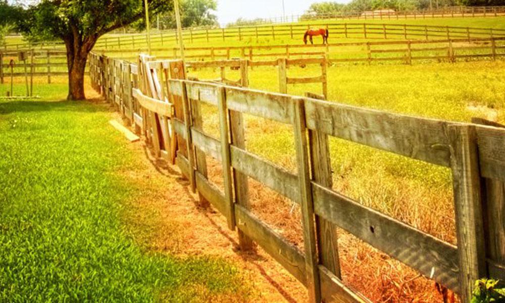 Post Fencing 2