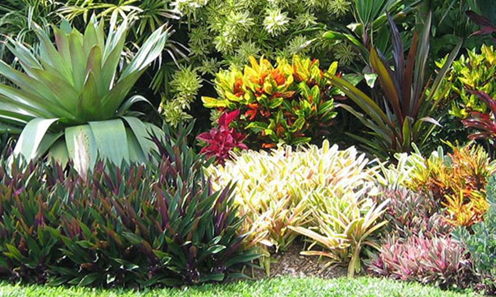 Garden Maintenance 4