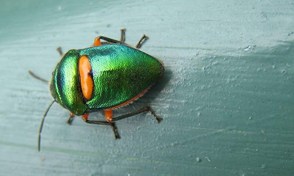 Garden Pests and Diseases 1