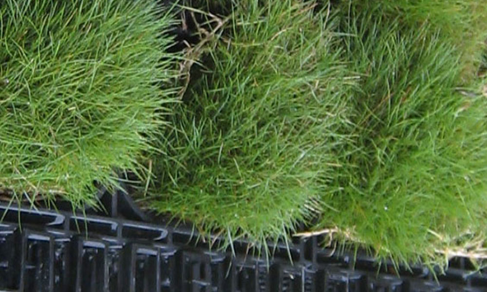 Green Walls 5