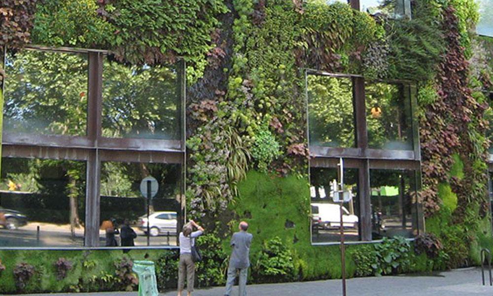 Green Walls 6