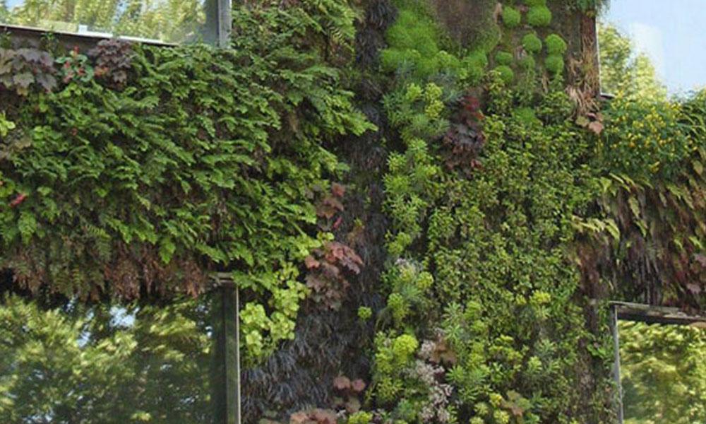 Green Walls 7
