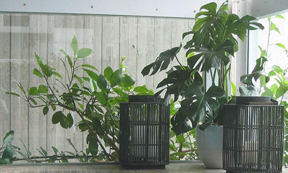 Indoor Planting 2