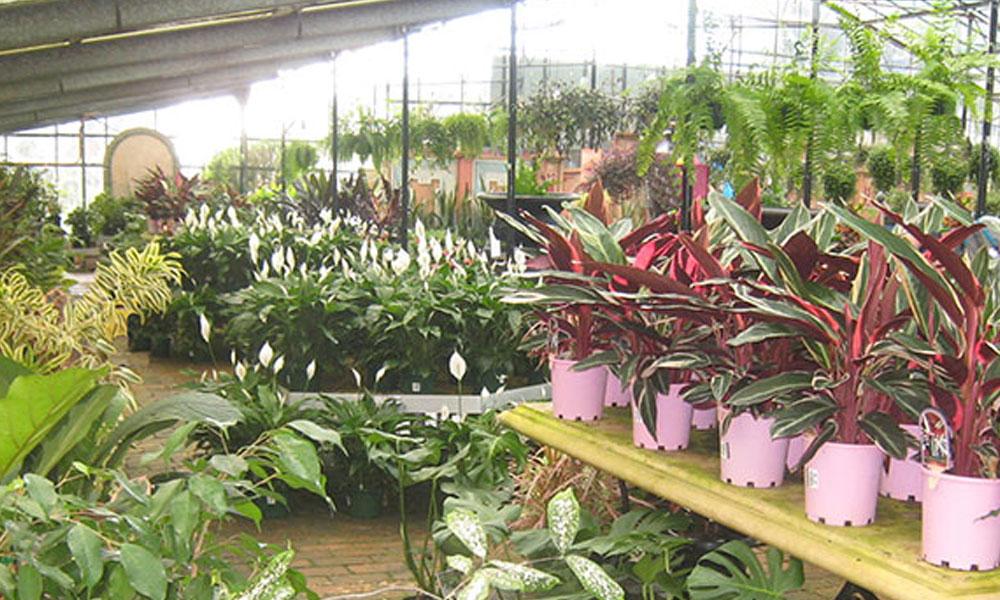 Indoor Planting 6