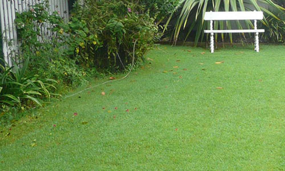 Lawn and Turfs 6