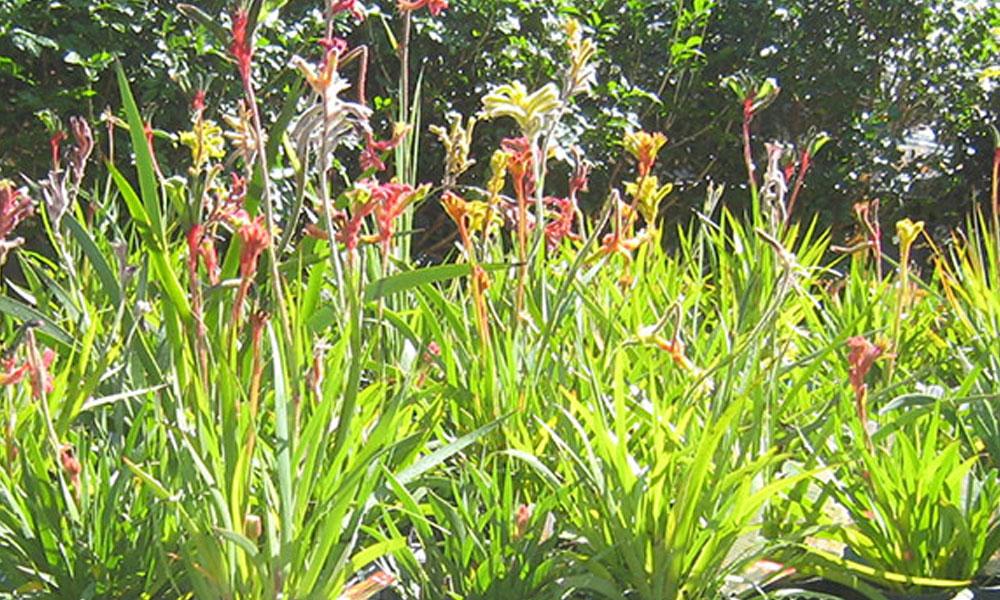 Native Gardens 4