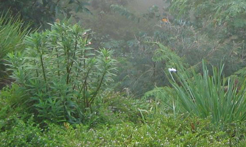 Native Gardens 5