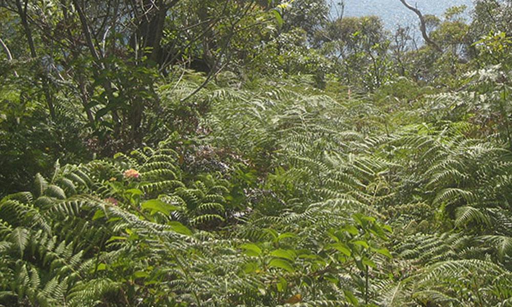 Native Gardens 8