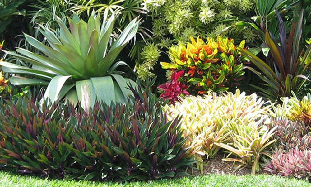 Organic Gardening 6