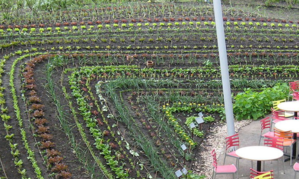 Permaculture 4