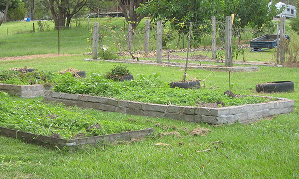 Permaculture 6