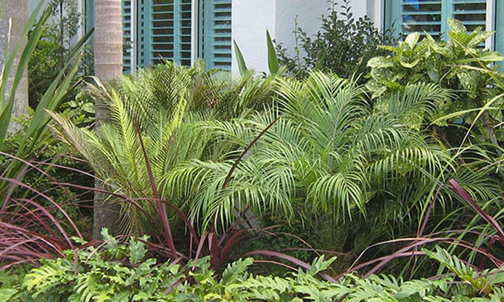 Planting, Garden and Landscape Designs 1