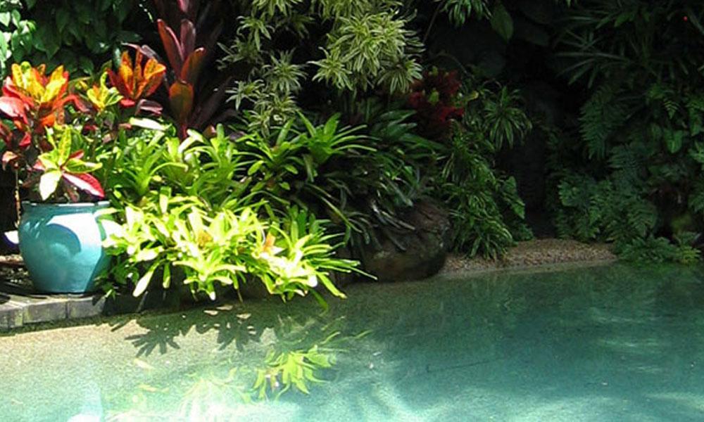 Planting, Garden and Landscape Designs 4