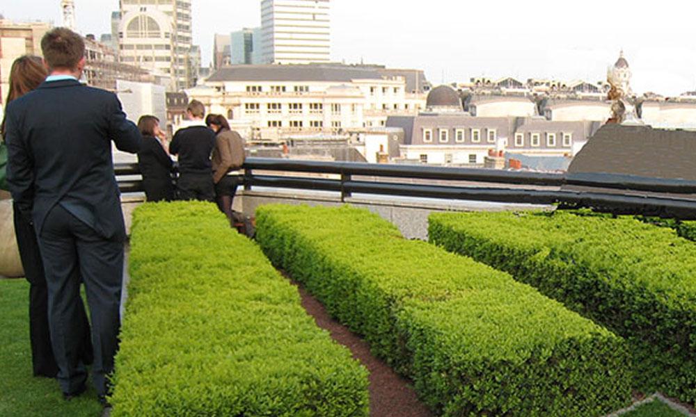 Planting, Garden and Landscape Designs 5