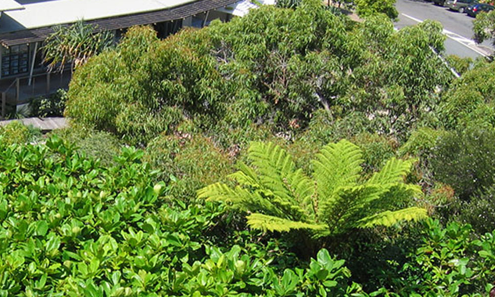 Plants 7