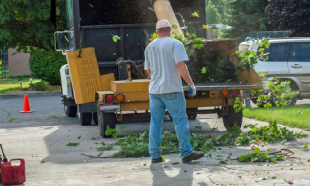 Tree Cutting Services 1