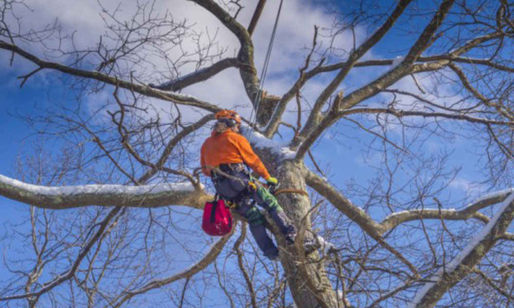 Tree Cutting Services 4