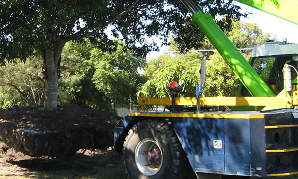 Tree Felling Services 1