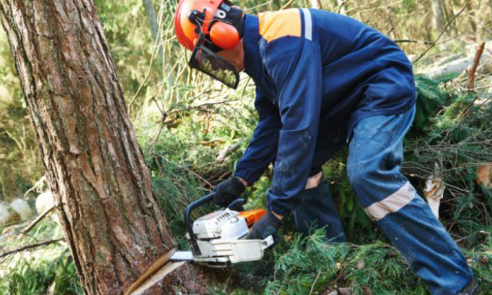 Tree Felling Services 3