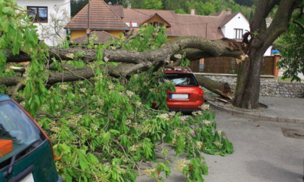 Tree Felling Services 5