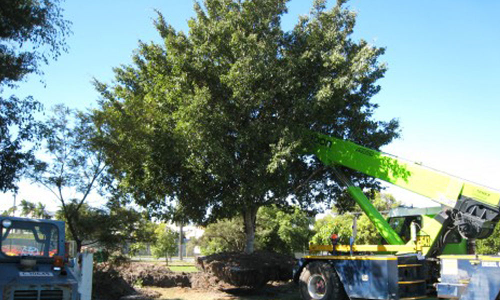 Tree Management Services 3