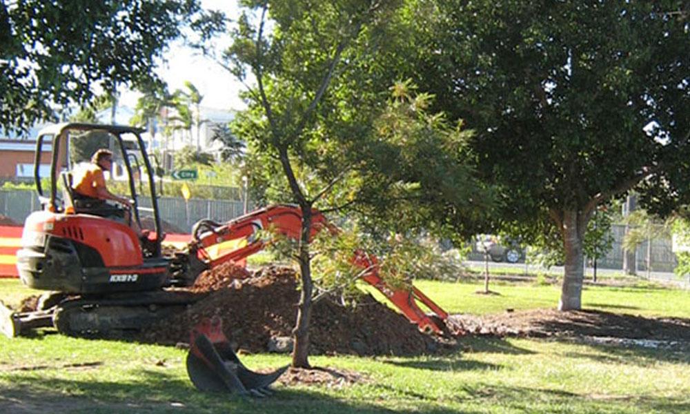 Tree Transplanting 1