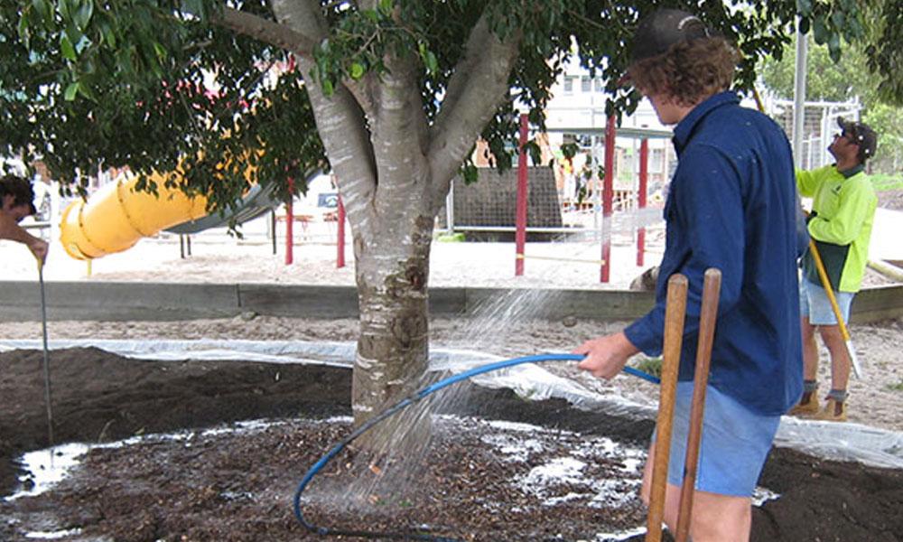 Tree Transplanting 6