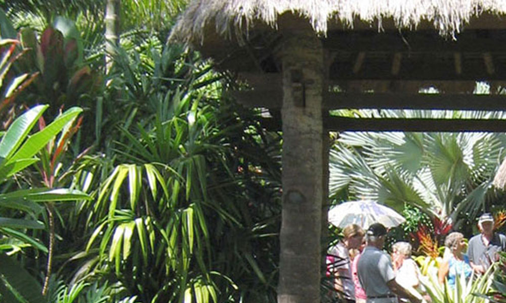 Tropical Landscaping 1