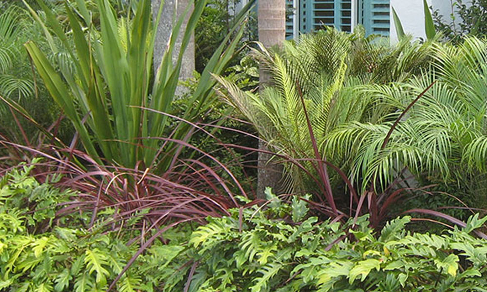 Tropical Landscaping 2
