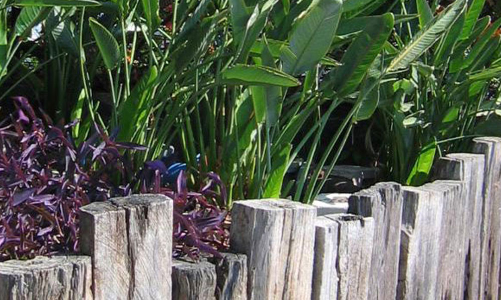 Tropical Landscaping 3