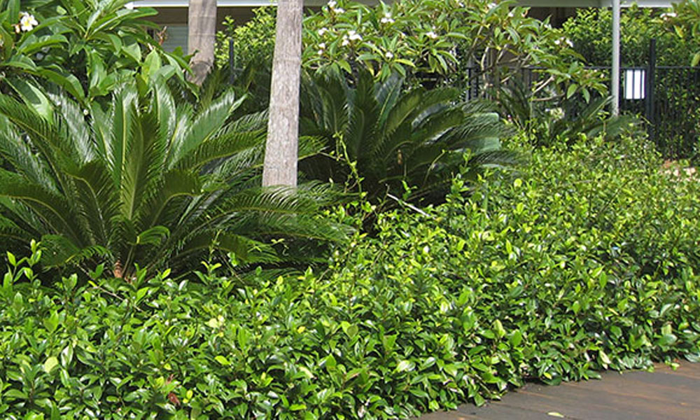 Tropical Landscaping 4