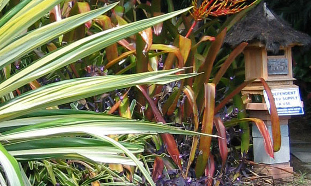 Tropical Landscaping 6
