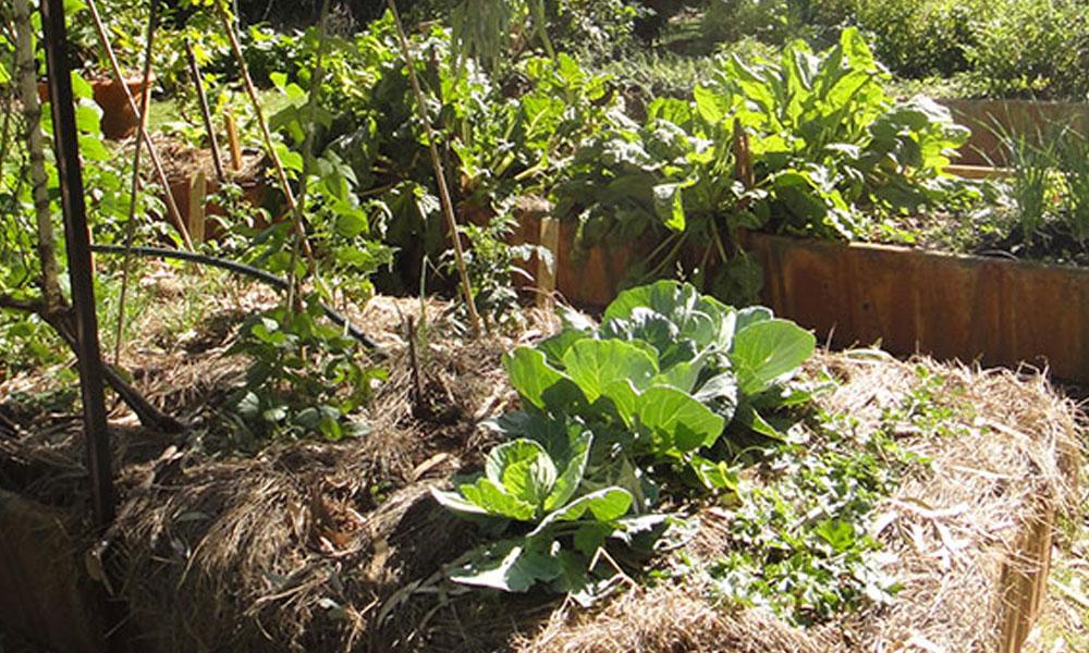 Vegetable Gardens 2