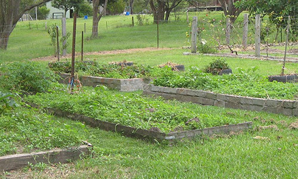 Vegetable Gardens 5