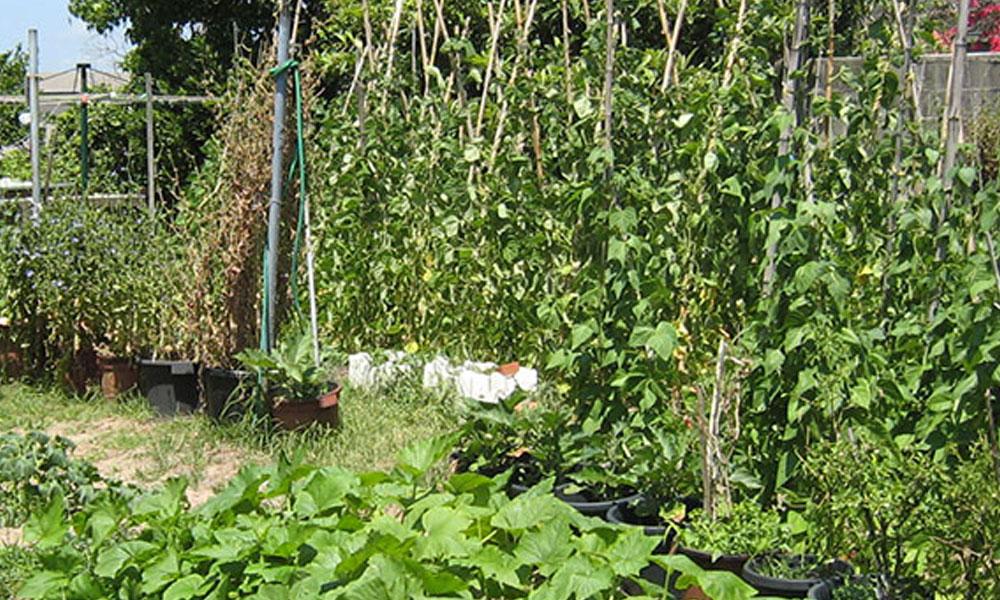 Vegetable Gardens 6