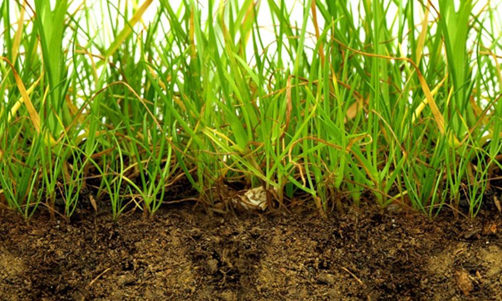 Sub Soil Drainage 6